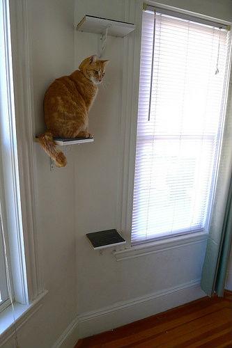 полочки для кошек