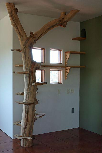 дерево у окна