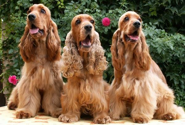 Rosi mit ihren beiden Kindern (Fidelio und Firsty)