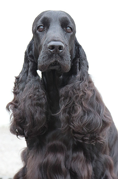 Queeny - 3 Jahre alt