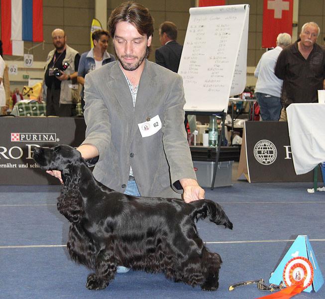 25.09.2011 - LGS Tulln 2011 - R.: Mrs. Ann Corbett (GB) - V1, CACA, Kl.Ch.Anw., Klubsiegerin 2011, Schönster Hund aus Österreichischer Zucht