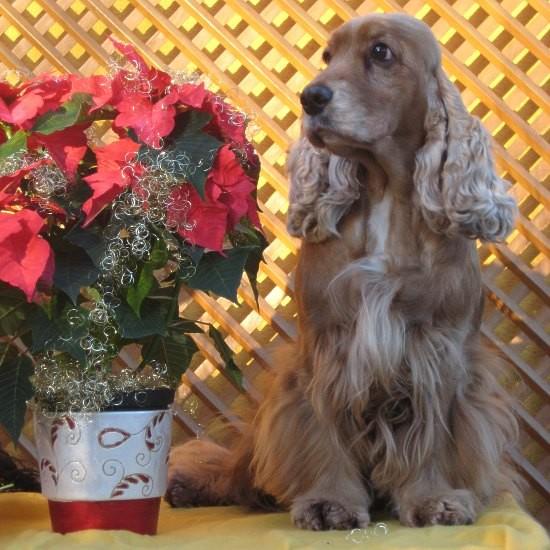 Firsty im Dezember 2010