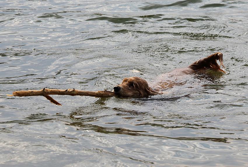 Firsty im Sommer 2013 - Schwimmen im Packer Stausee