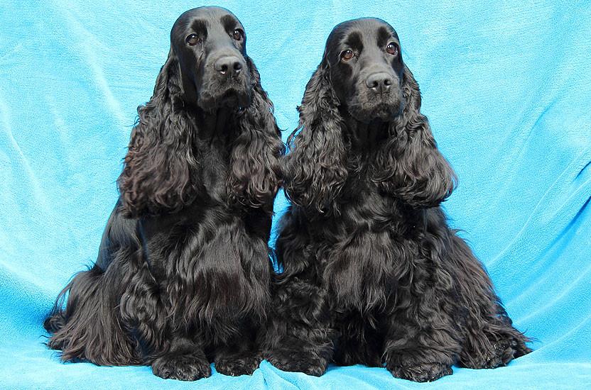 Hummel und Queeny - 2012
