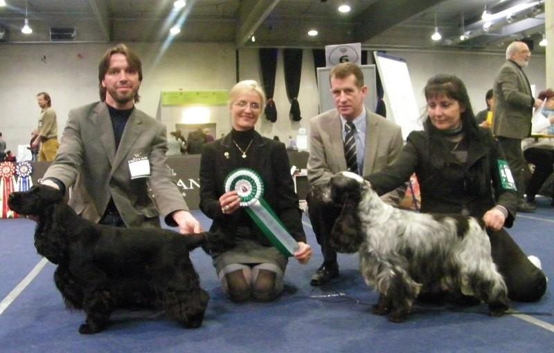 Klubsiegerschau 2011: Queeny wird Klubsiegerin und Schönster Spaniel aus Österreichischer Zucht
