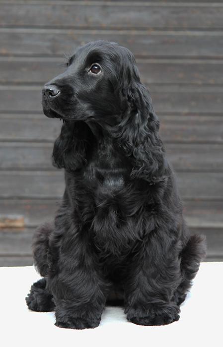 Paula - 5 Monate alt