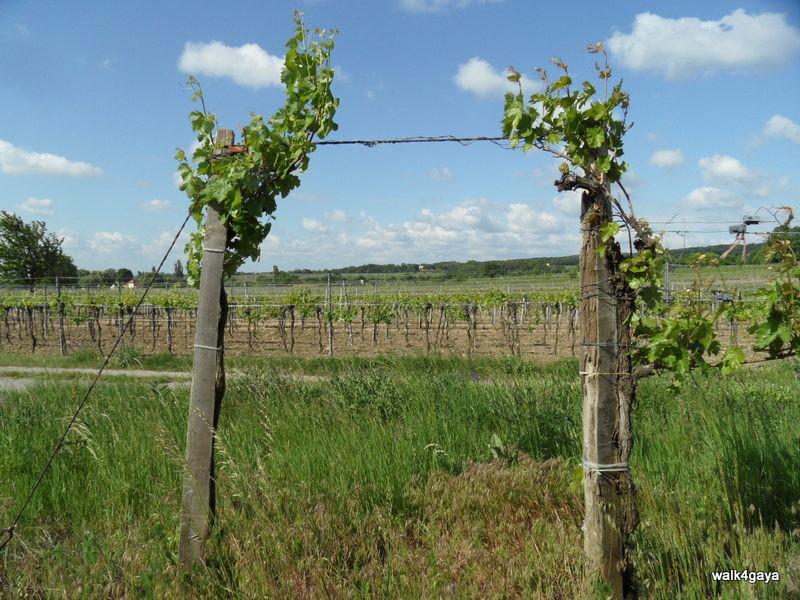 Eingang zu einem der Weingärten der Weitzers