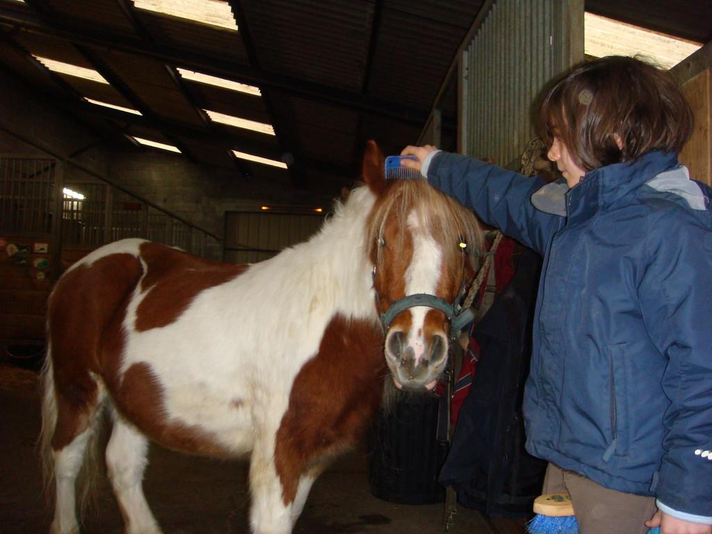 Mon poney au pansage