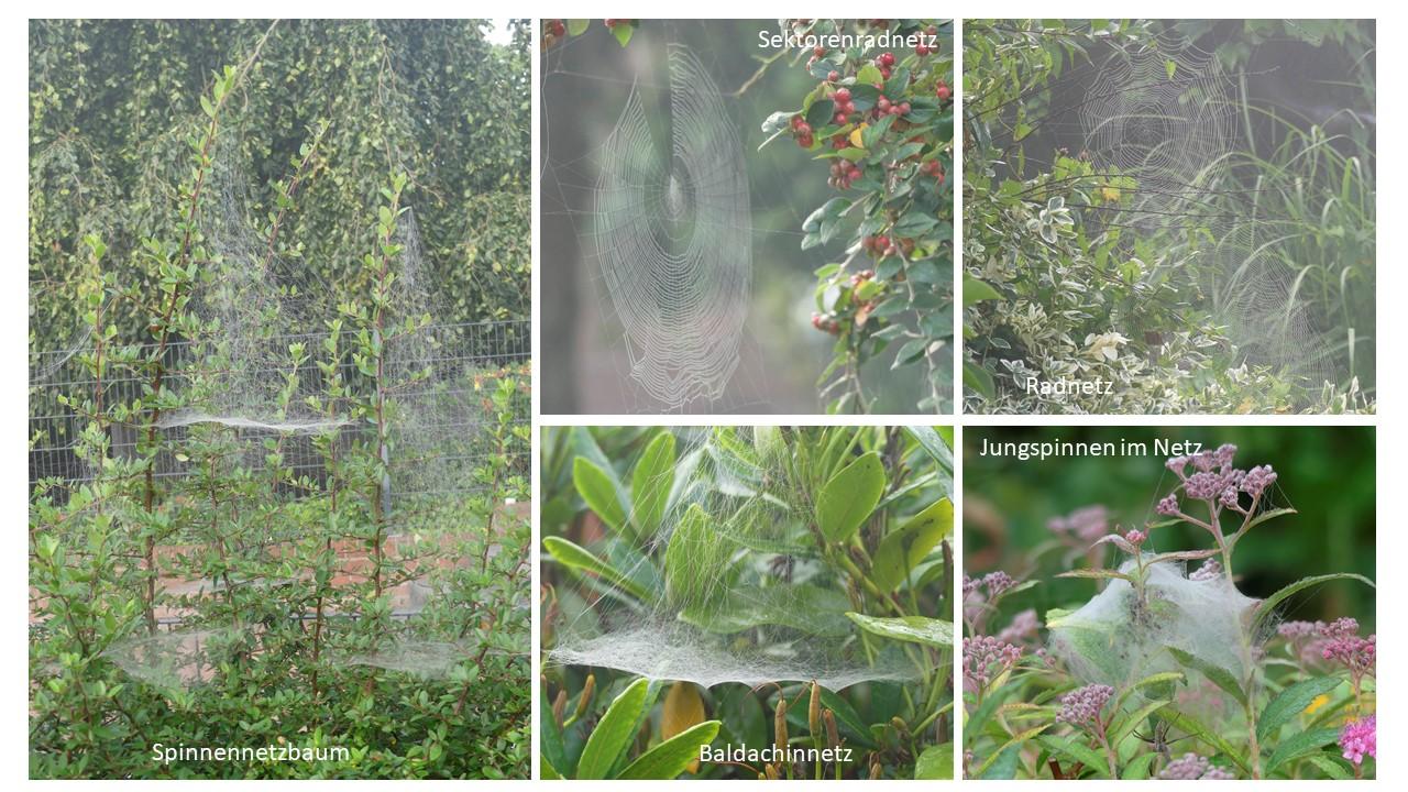 Spinnennetze - Foto: Gesine Schwerdtfeger