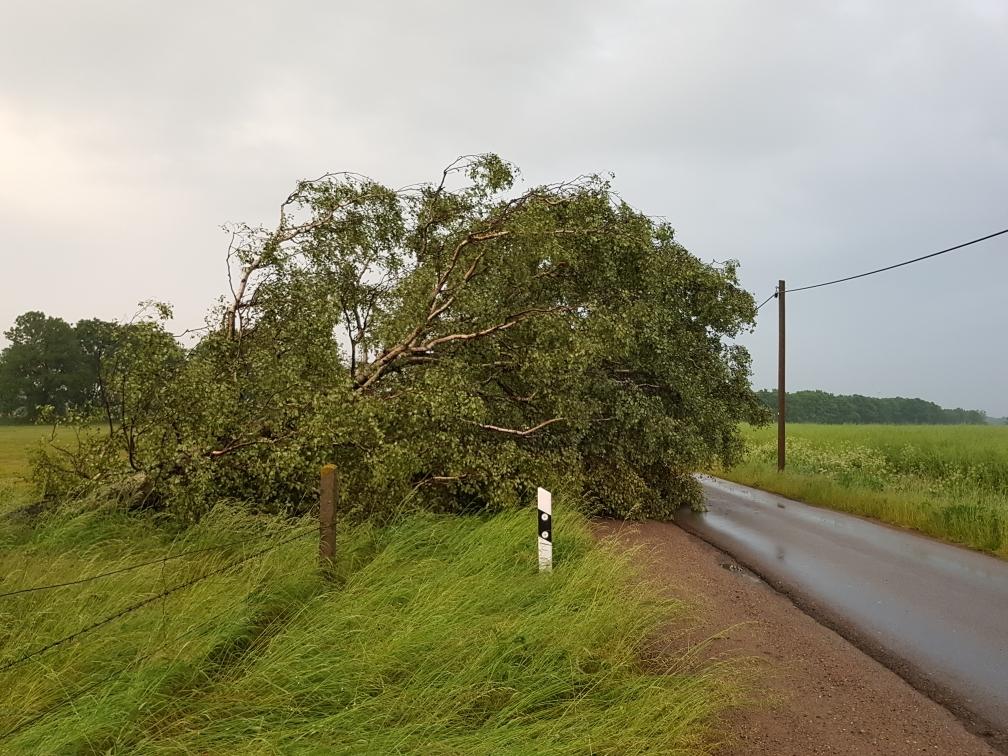 umgestürzter Baum auf der Straße nach Drenkow