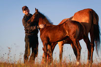 Eleveur de chevaux