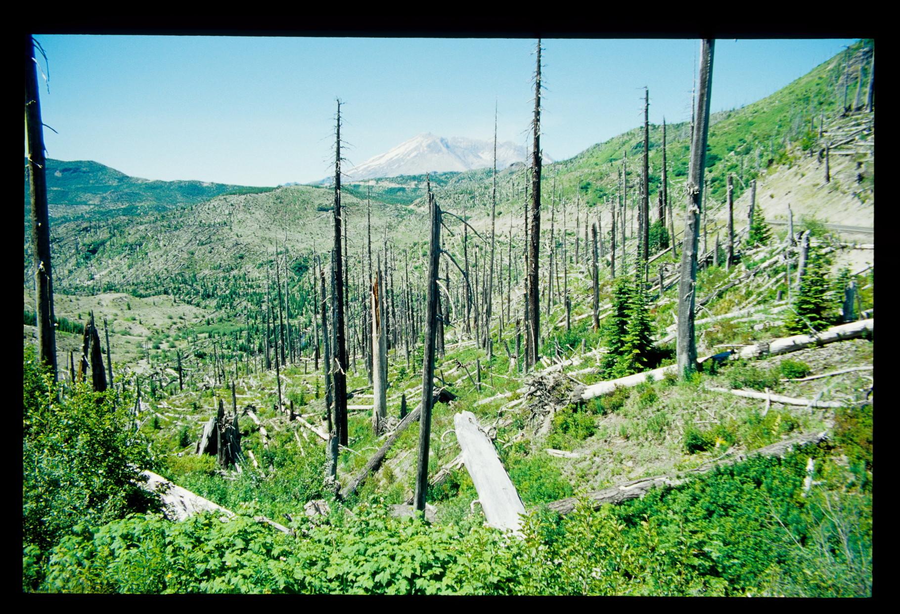 Im Hintergrund der Mt. St. Helens