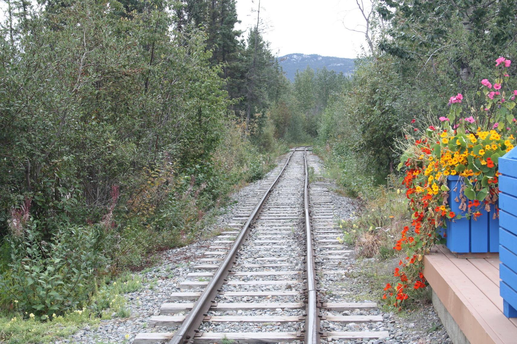 """Die Schmalspurbahn """"Trolley"""" in Whitehorse."""