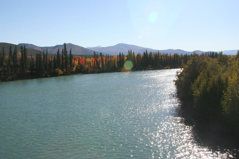 Der Yukon nahe Whitehorse