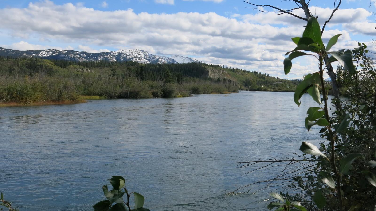 Ein weiteres Foto des Yukon bei Whitehorse.