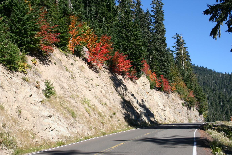 Zufahrtsstrasse zum Mt. St. Helens