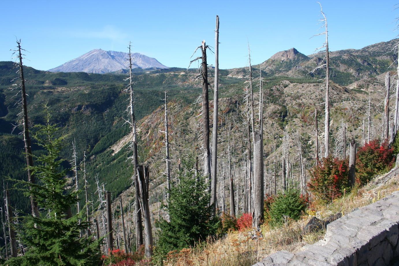 Landschaft 10 km Luftlinie vom Mt. St. Helens ca. 30 Jahre nach dem Ausbruch des Vulkans 1980