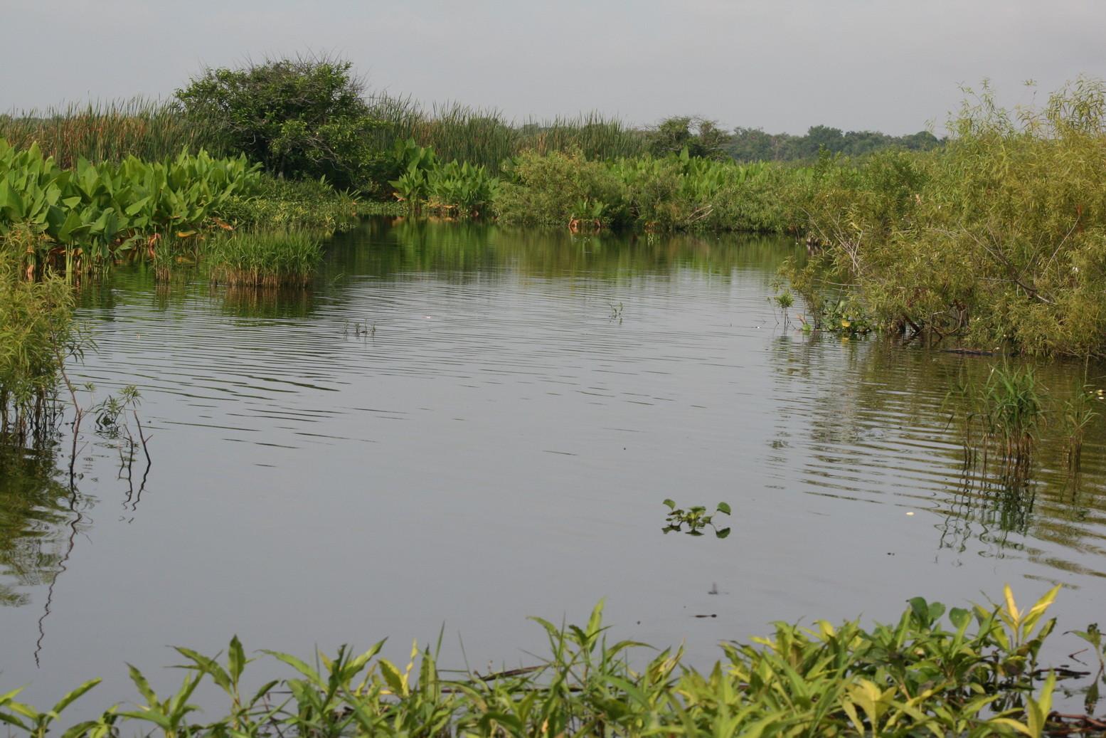 Blick auf die Sümpfe der Everglades