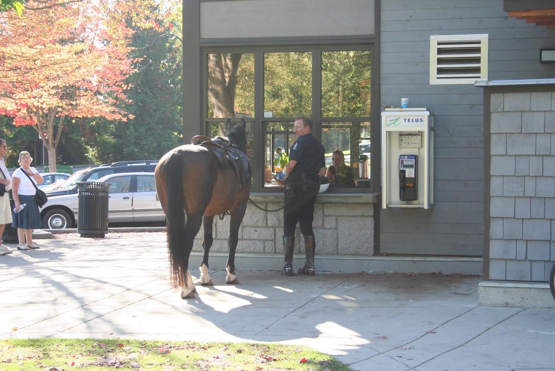 Was möchte das Pferd kaufen?