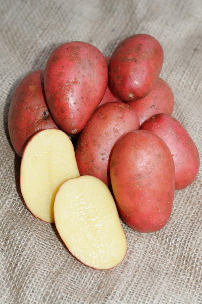 Kartoffel Härtl