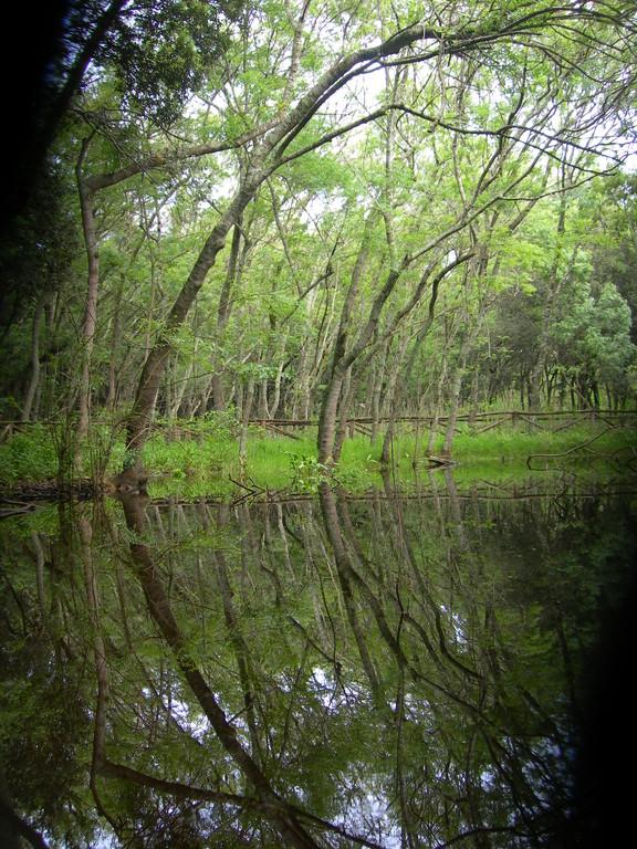 oasi di Cuma