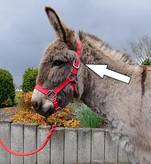 bedienerfreundlicher Verschluss im Genick - auch komfortabel für die Eselohren.