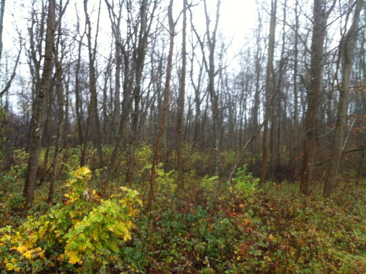 einen kleinen Bildlichen Einblick in die verregnete 10km Strecke in Leipheim  - Fotos K.K.