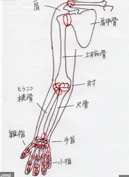 腕の関節のイラスト