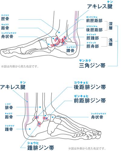 アキレス腱にテンションがかかると、かかと(踵骨)に痛みがでます。