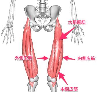 大腿直筋・外側広筋・内側広筋・中間広筋の4つの筋肉を大腿四頭筋といいます。