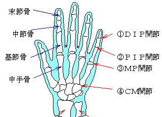 手の関節と骨の種類