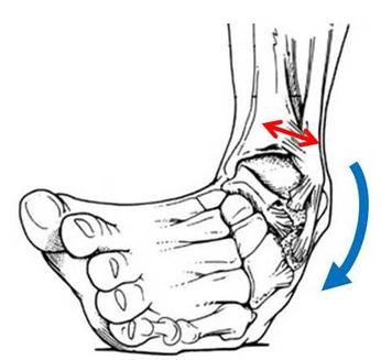 捻挫をすると、すねの2本の骨が離される力がはたらきます。