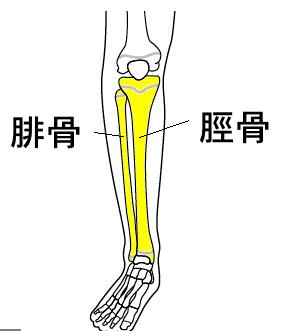 すねは腓骨(ひこつ)と脛骨(けいこつ)という2本の骨があります。