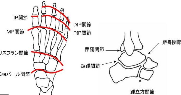 足にはたくさんの関節があって、これらの関節がずれると足のしつこい痛みの原因になります。