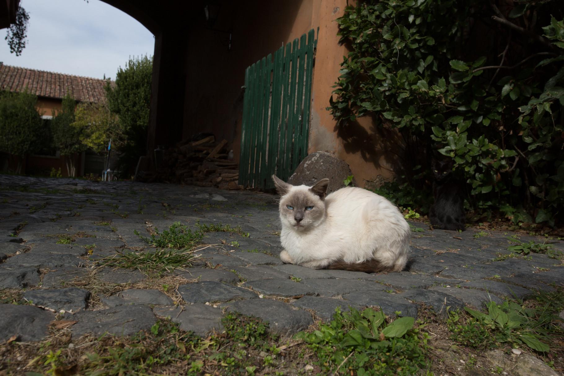 Borgo Boncompagni Ludovisi - un ospite inatteso si gode la giornata di sole