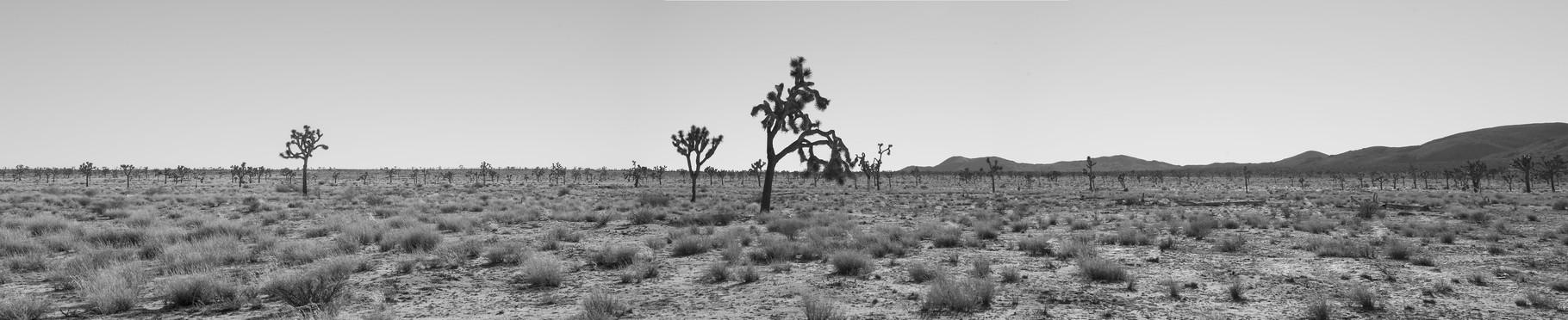 Foto: Ilaria Merli...Joshua Tree National Park