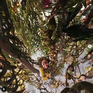 Von Decke hängende Pflanzen und Baumstämme