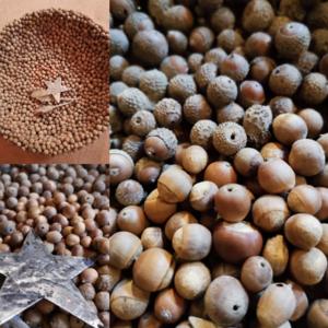 Komposition verschiedener Beeren und Naturmaterialien