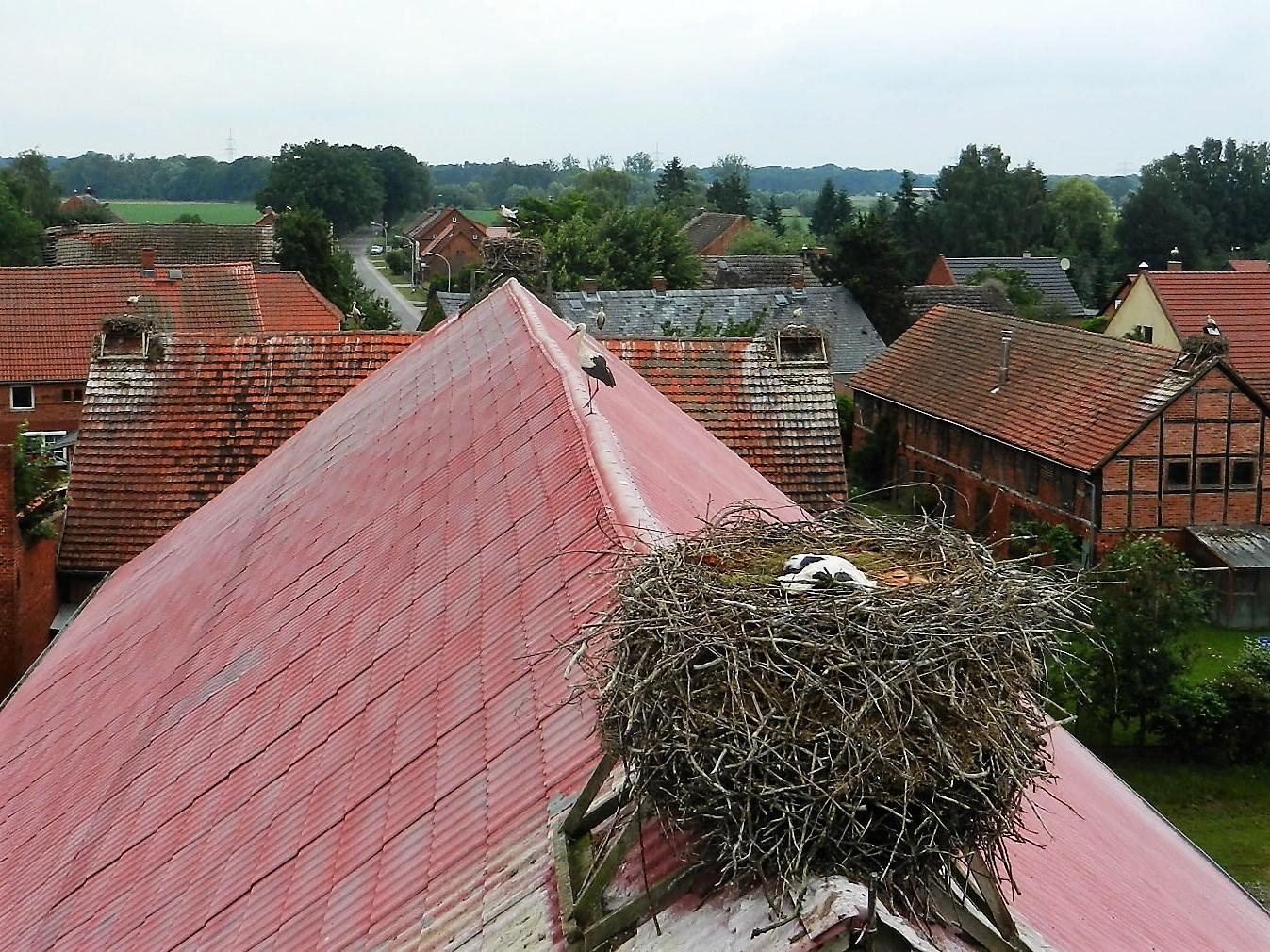 Beim Herannahen der Hebebühne verlässt der Altstorch das Nest und beobachtet das Treiben aus sicherer Entfernung