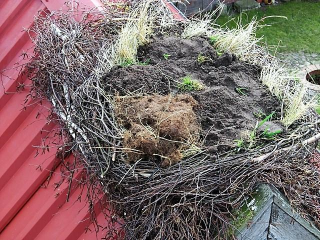 Das Innere des Nestes wird zur Auffüllung und Beschwerung mit Grassoden, Stroh usw. ausgepolstert