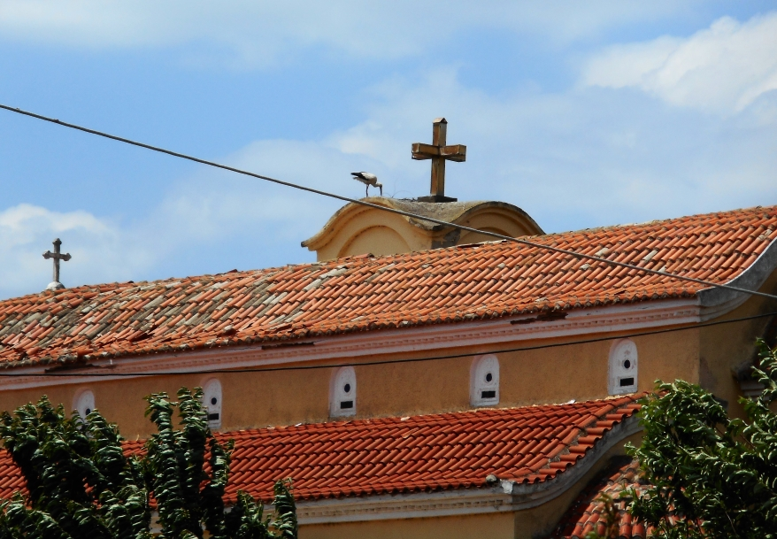 Ein Nest in Poros befindet sich auf der Kirche, alle anderen Nester sind auf Strommasten