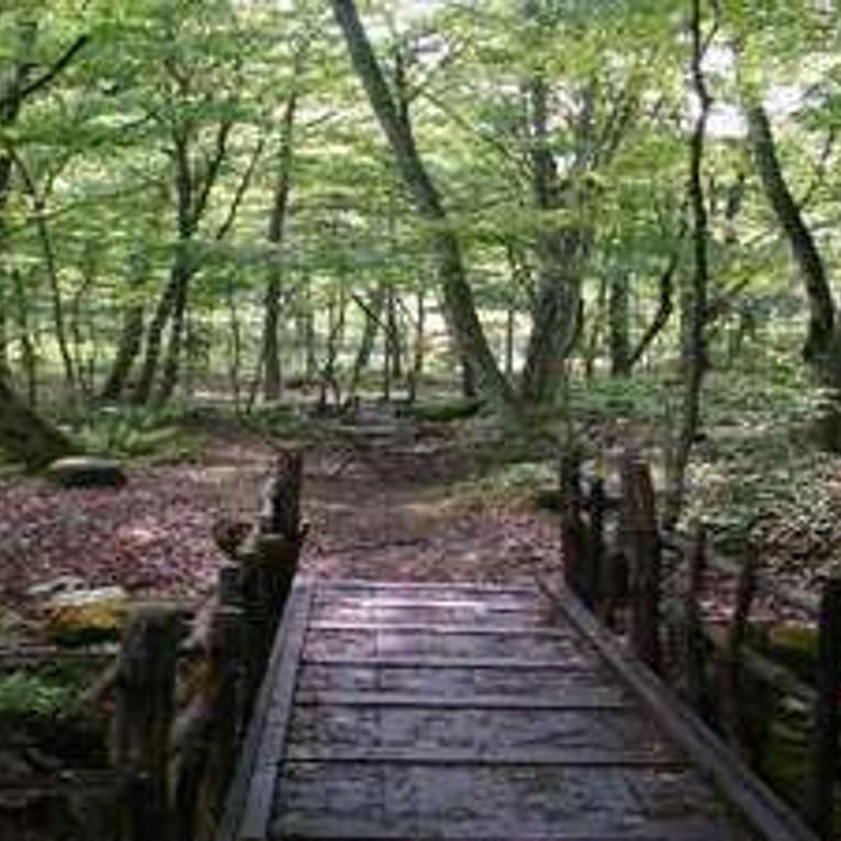 秋神温泉敷地内の手作り散策路
