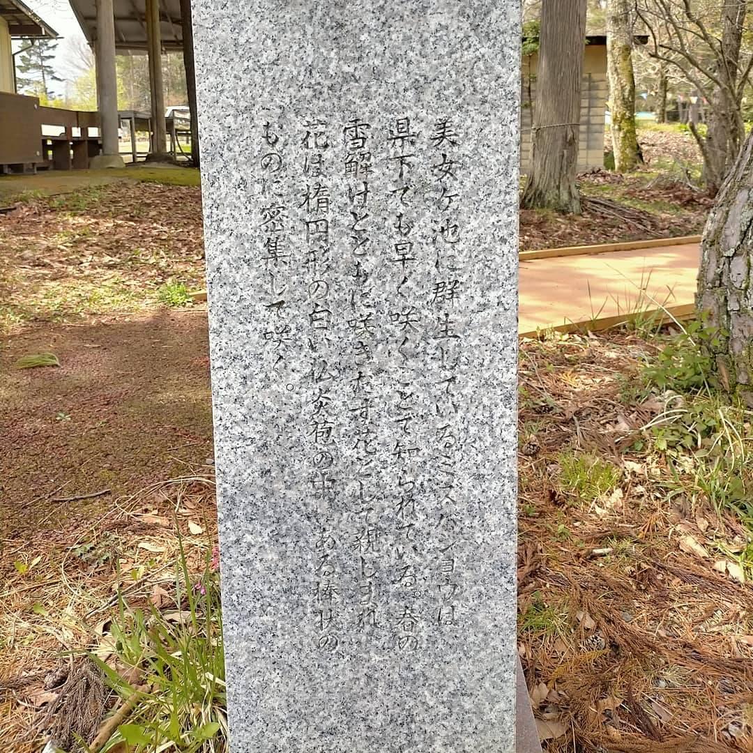飛騨高山 美女高原の水芭蕉4