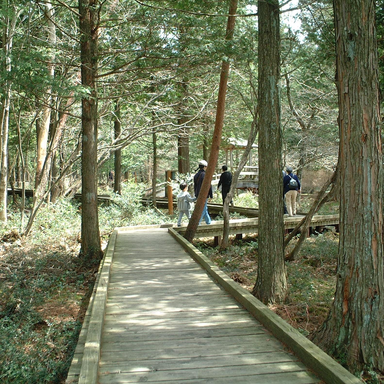 美女ケ池周辺の遊歩道