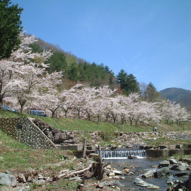 春(5月上旬)は桜がきれい!
