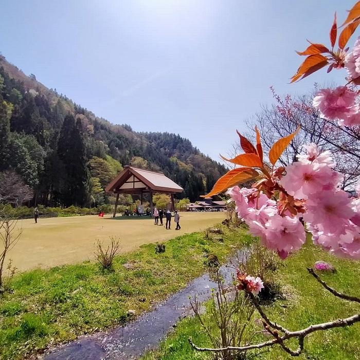 グランドゴルフ場と八重桜