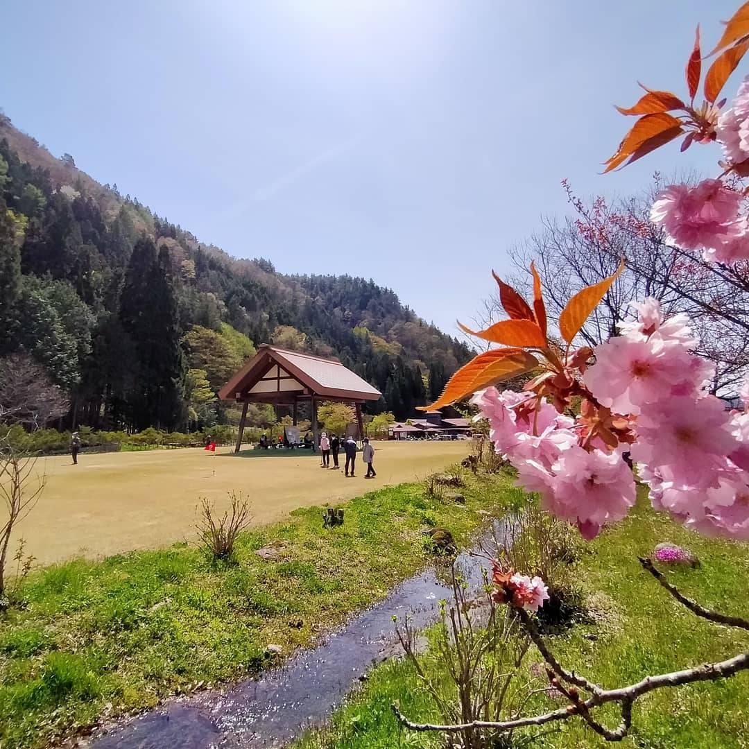 飛騨あさひ桜情報0504