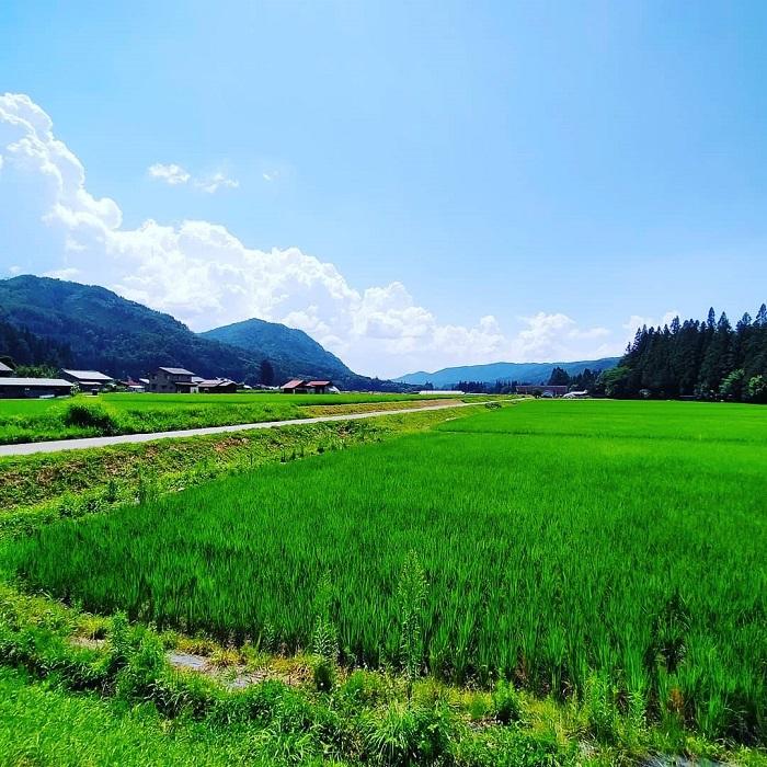 田舎で夏休み「癒しの田んぼ道」
