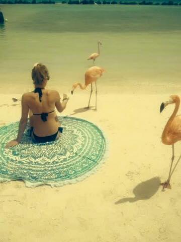 Vakantie Beach Roundie Aruba Flamingo