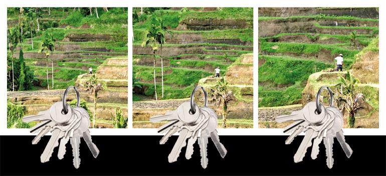 Design Geschenkidee Bali Reisfeld